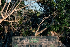 In-Nature-Parrot-Cay_0178